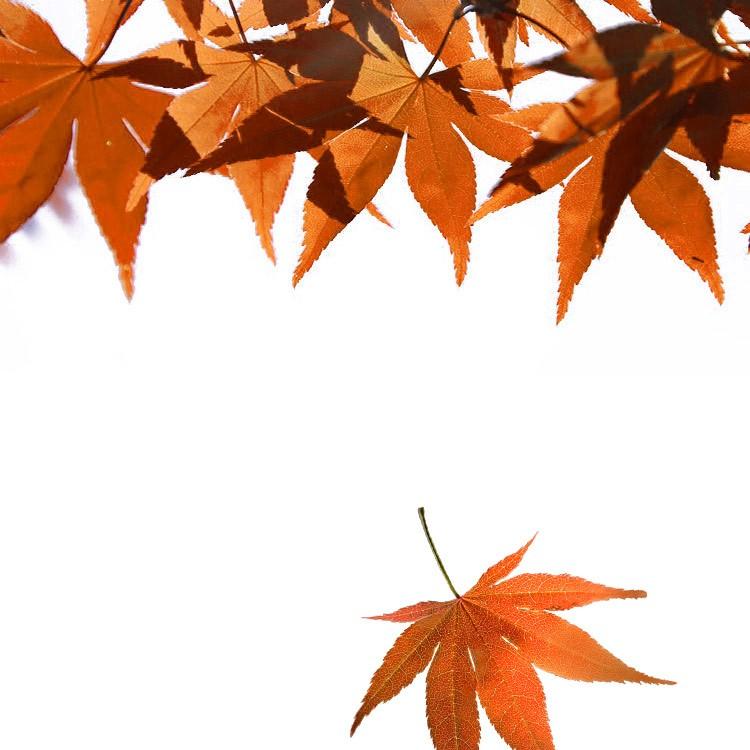 raw-leaves_a.jpg