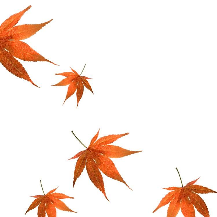 raw-leaves_b.jpg