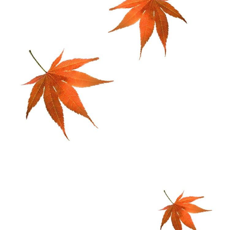raw-leaves_c_b.jpg