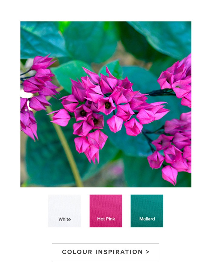 raw-colour_inspiration.jpg