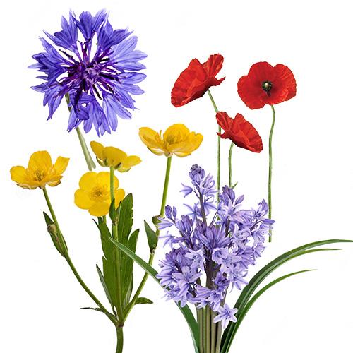 raw-flowers-header.jpg