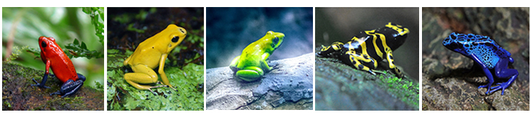 raw-frogs.jpg