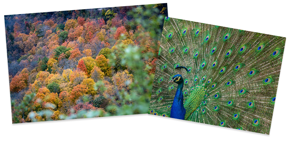 raw-autumn-colours.jpg