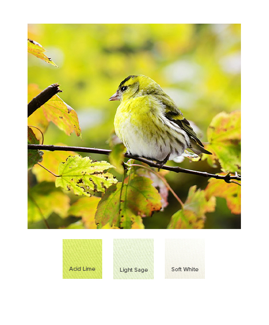 raw-autumn_combination_ss20_g.jpg