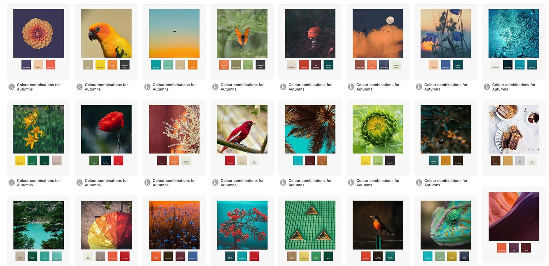 raw-autumn_colour_combos.jpg