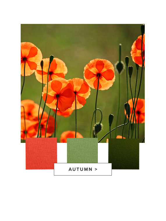 raw-landing_page_autumn_aw20_for_web.jpg