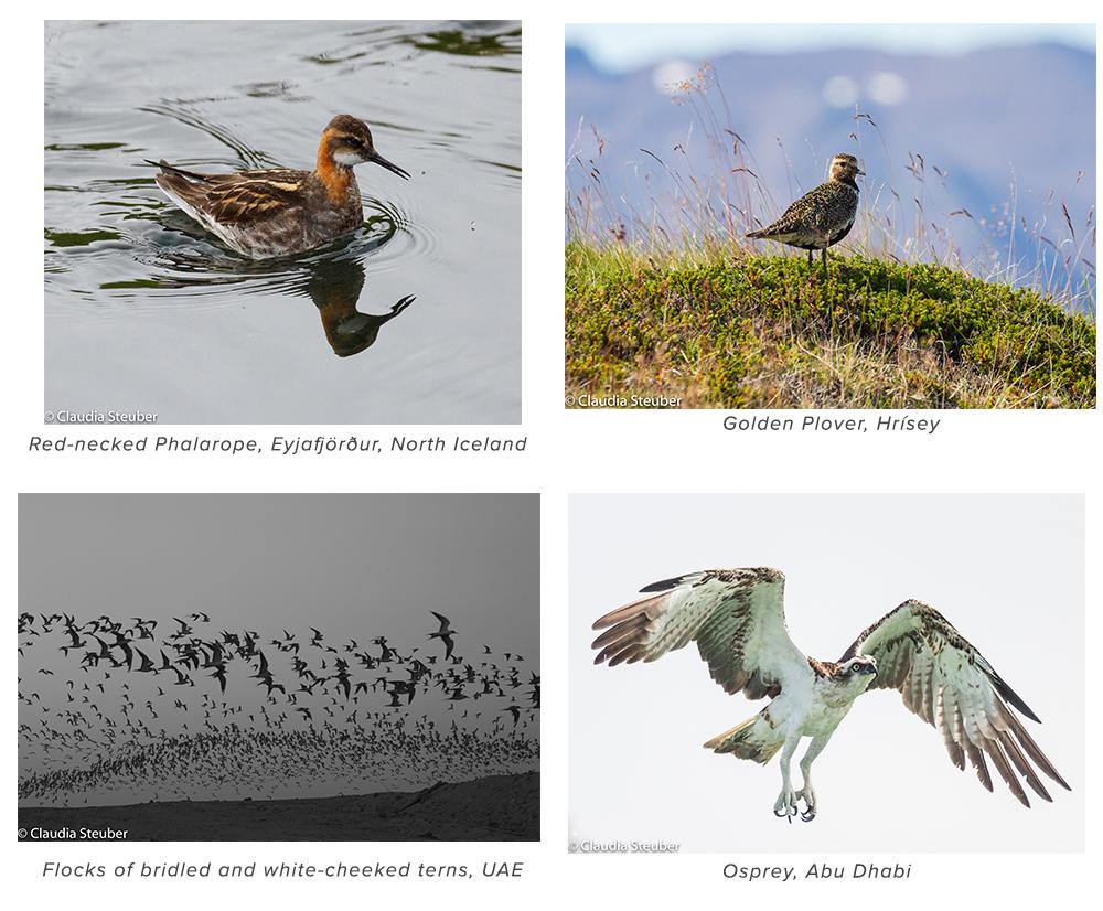 raw-birds_b.jpg