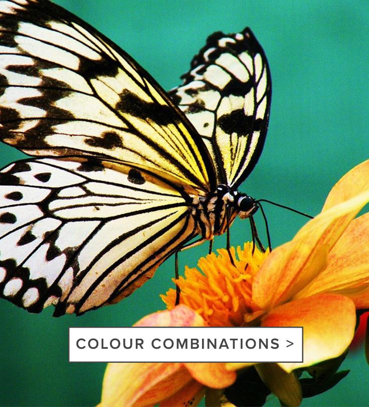 raw-colourcombinations_b.jpg