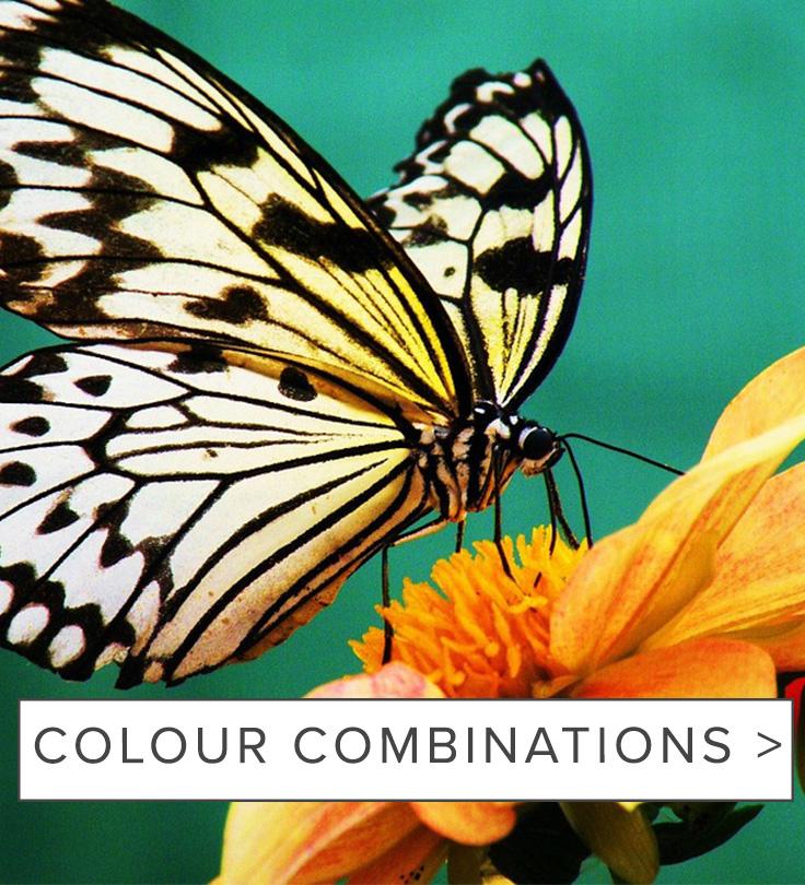 raw-colourcombinations_mobile.jpg