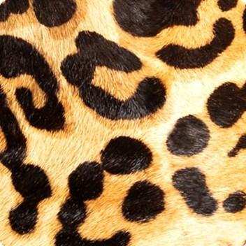 Honey Leopard
